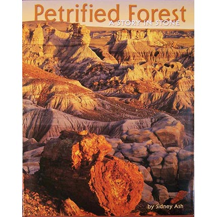 Petrified Forest – A Story in Stone