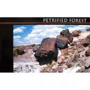Petrified Forest Postcard Book