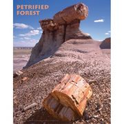 Poster with pedestal log and petrified wood