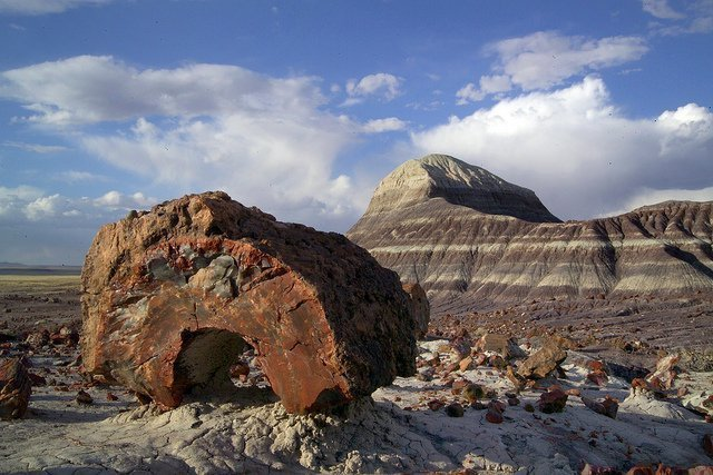 Park backcountry | Photo courtesy of Petrified Forest National Park