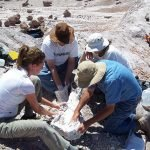The excavation of a phytosaur skull from Devils Playground in 2005 | Photo courtesy of Petrified Forest National Park