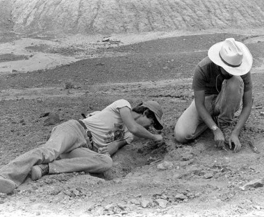 Paleo dig | Photo courtesy of Petrified Forest National Park
