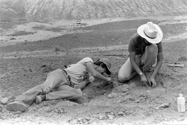 Paleo dig | Photo courtesy of Petrified Forest National Park