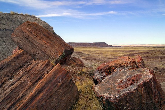 Petrified logs | Photo courtesy of Petrified Forest National Park