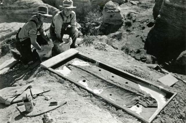 Preparing a fossil to move | Photo courtesy of Petrified Forest National Park