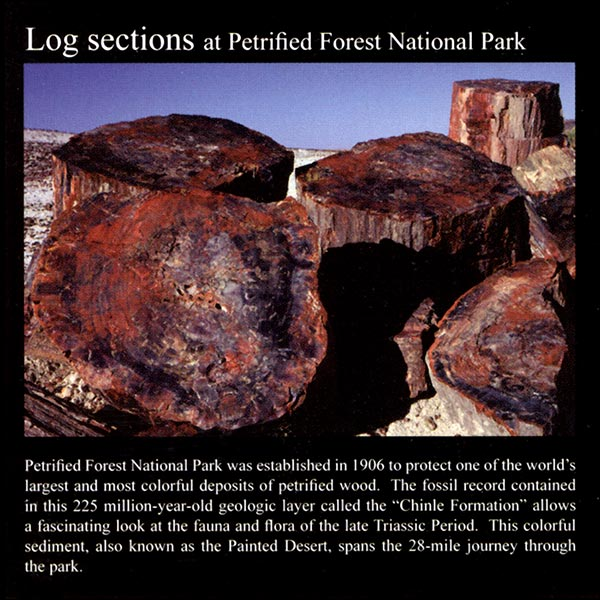Large Petrified Wood Log Sections: Commemorative Sticker