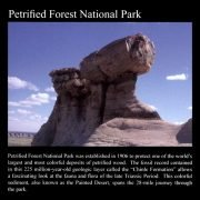 Pedestal Log: Commemorative Sticker