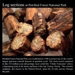 Petrified Wood Log Sections: Commemorative Sticker