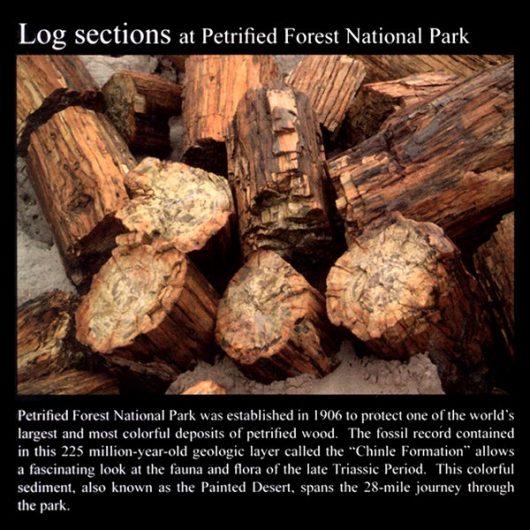 Petrified Wood Log Sections: Commemorative Sticker