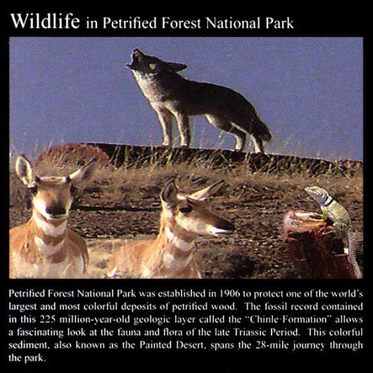 Petrified Forest Wildlife: Commemorative Sticker