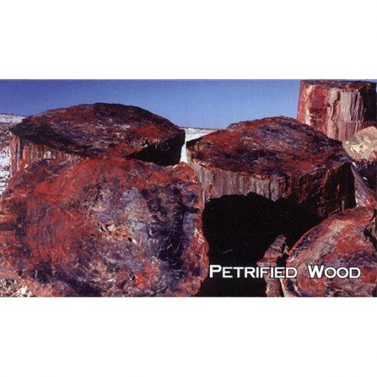 Large Petrified Wood Logs Magnet