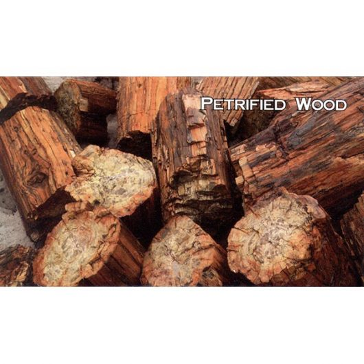 Petrified Wood Log Sections Magnet