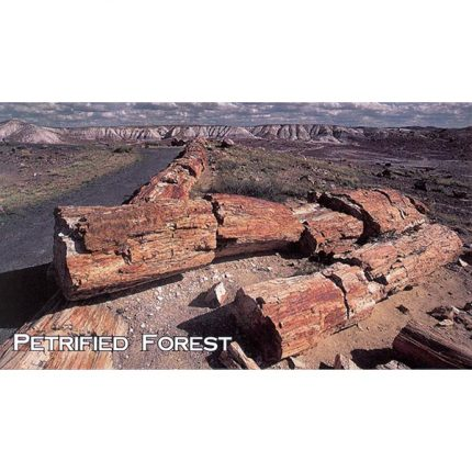 Petrified Logs Magnet