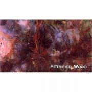 Petrified Wood Close-Up Magnet