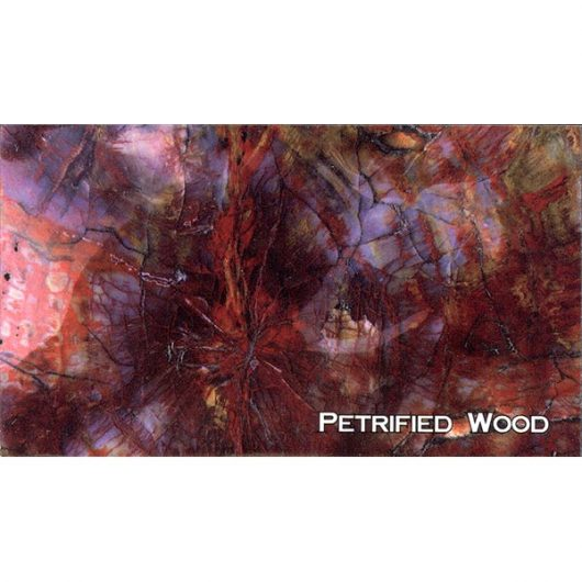 Petrified Wood Close-Up Magnet