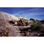 Petrified Forest Wilderness Postcard