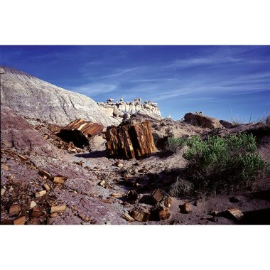 Petrified Forest Wilderness Postcard