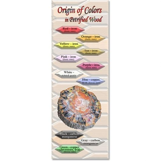 Origin of Colors in Petrified Wood Bookmark