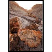 Petrified Logs on Blue Mesa | Photo by Larry Lindahl