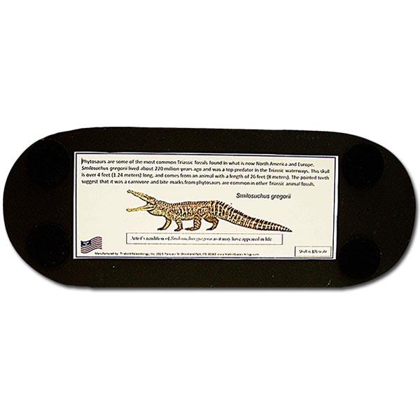 Phytosaur Skull Replica - Bottom Label