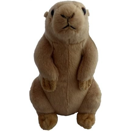 Prairie Dog Front View